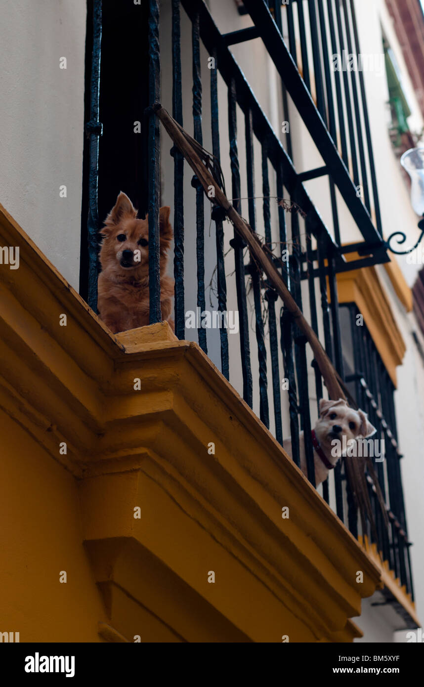 Two Dogs at Balcony - Stock Image