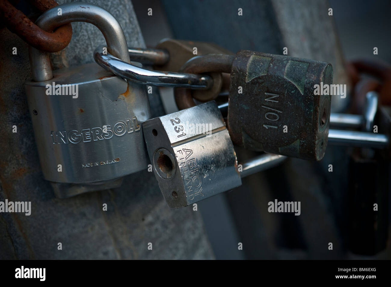 interlocked interlocking chained Padlocks on a gate - Stock Image