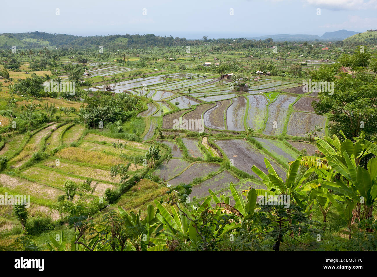 Rice field at Tirta Gangga Bali Indonesia - Stock Image