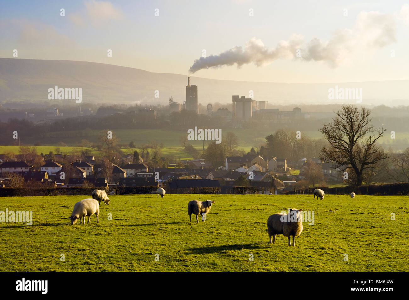 Sheep graze above West Bradford, with smoking Castle Cement works in distance near Clitheroe, Ribble Valley, Lancashire. - Stock Image