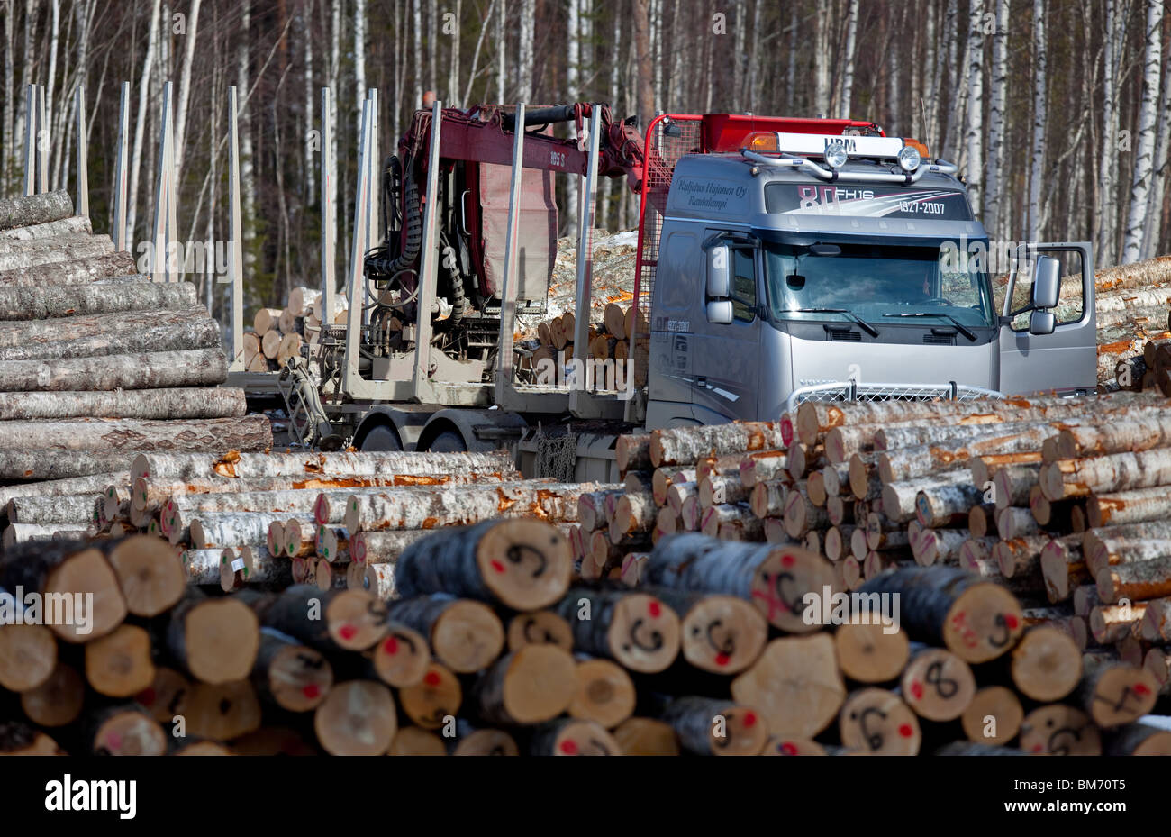 Finnish logging truck between birch log piles in log collection point  , Finland Stock Photo