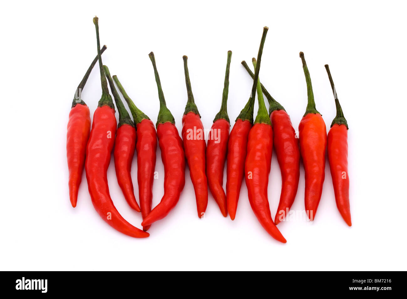 line of birds eye chillies on a white background - Stock Image