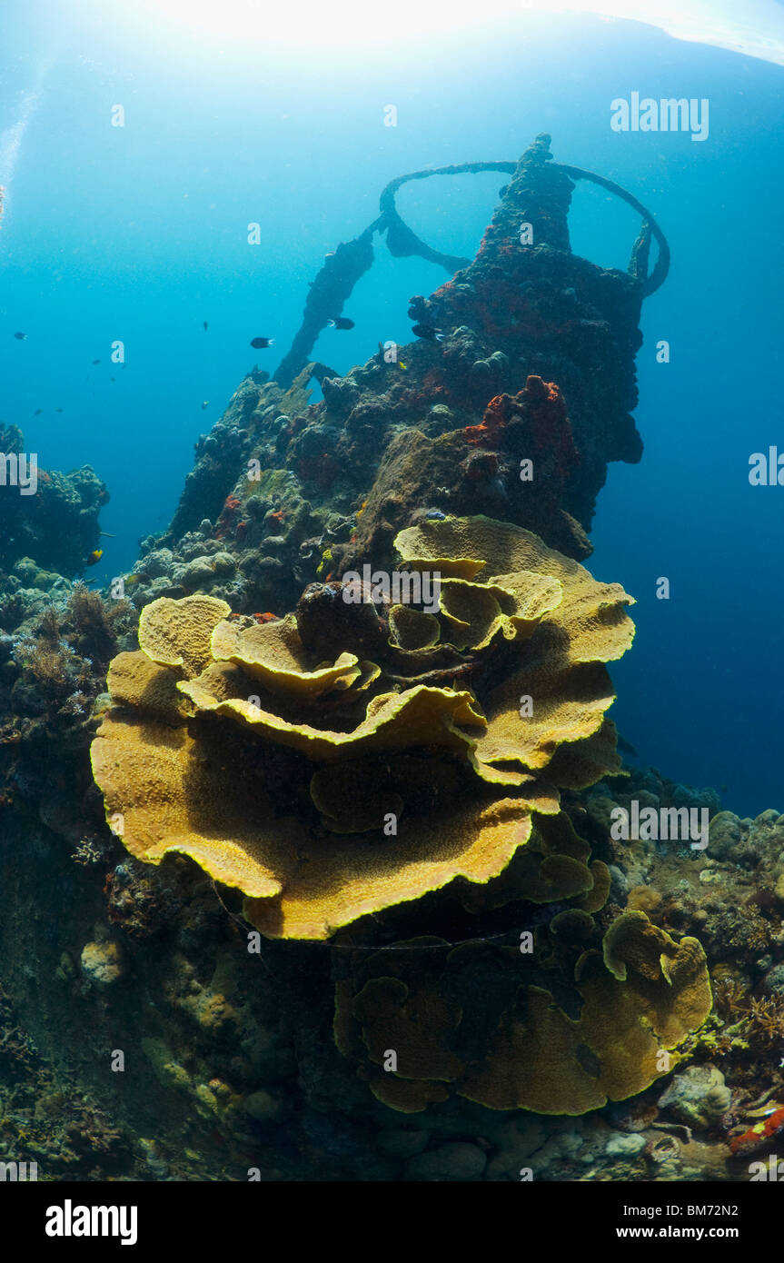 Kasi Maru wreck overgrown with corals.  Solomon Islands. - Stock Image