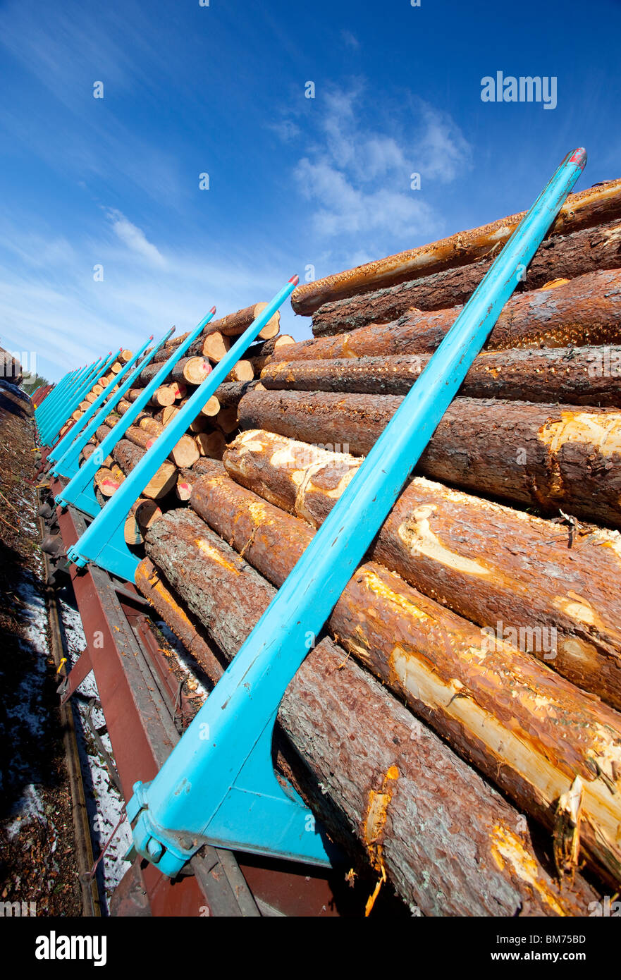 Cargo train loaded with pine ( pinus sylvestris ) logs , Finland - Stock Image