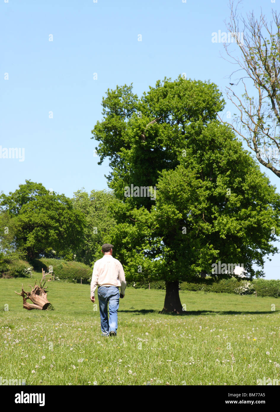 A farmer on greenbelt land in the English countryside. - Stock Image