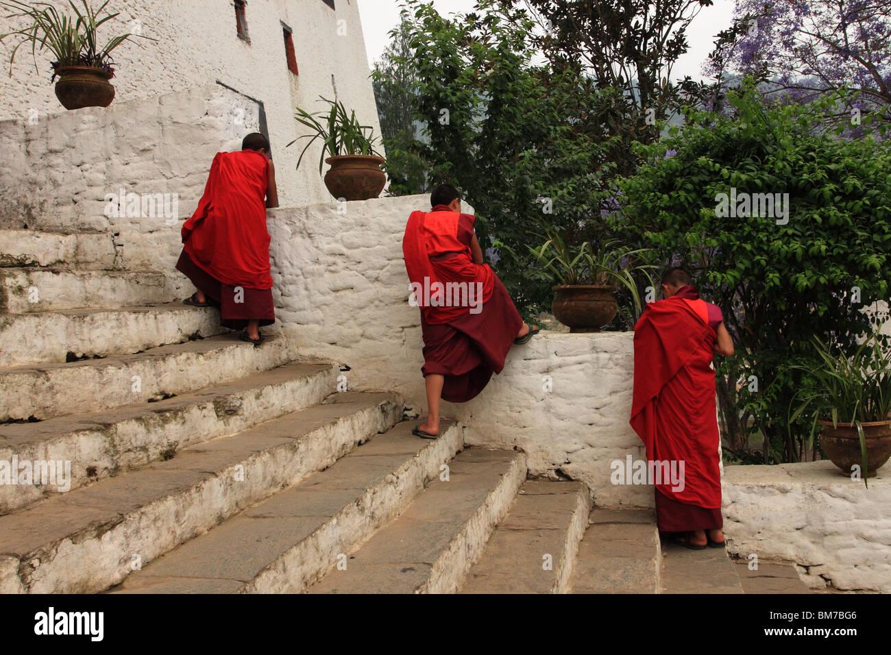 Buddist monks on the steps of Punakha Dzong, Bhutan Stock Photo