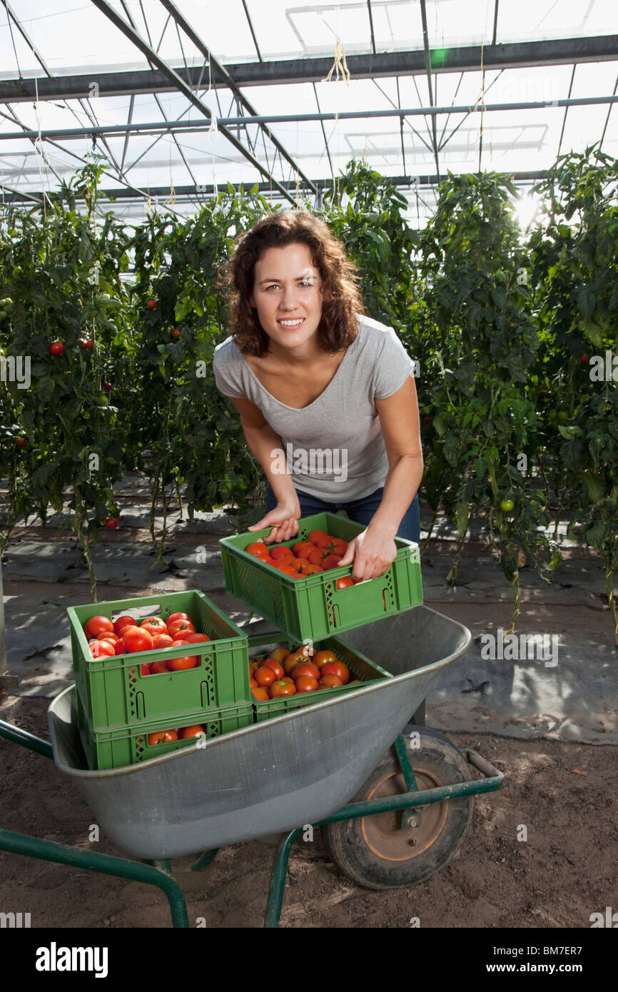 A woman stacking crates of fresh tomatoes in a greenhouse - Stock Image