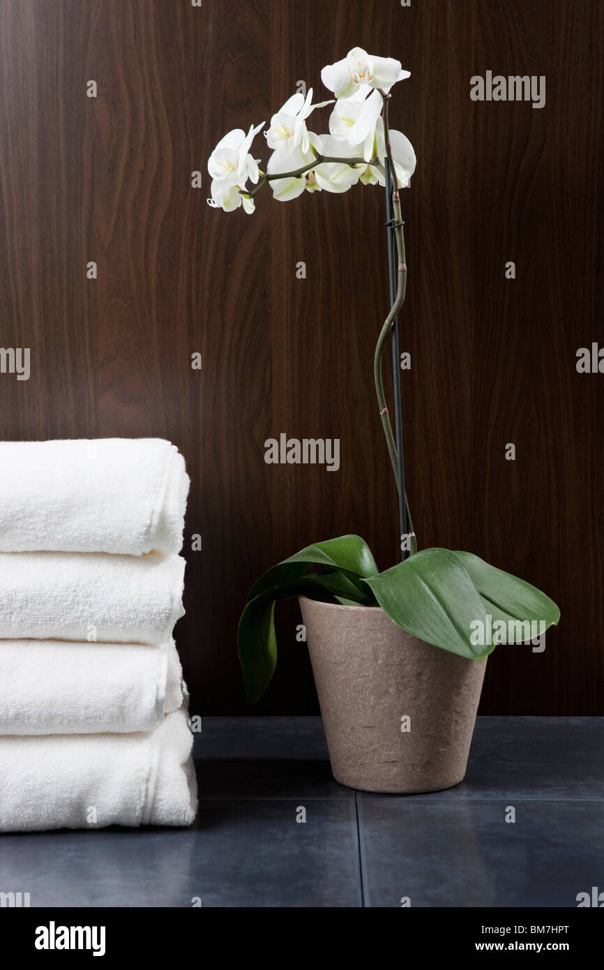 Orchid Flower Pot Care Stock Photos Orchid Flower Pot Care Stock