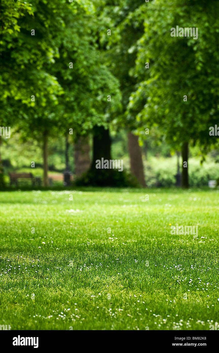 Summer park - Stock Image