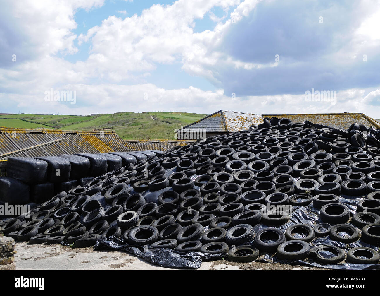 old tyres used to cover and protect winter feed for animals on a farm in cornwall, uk - Stock Image