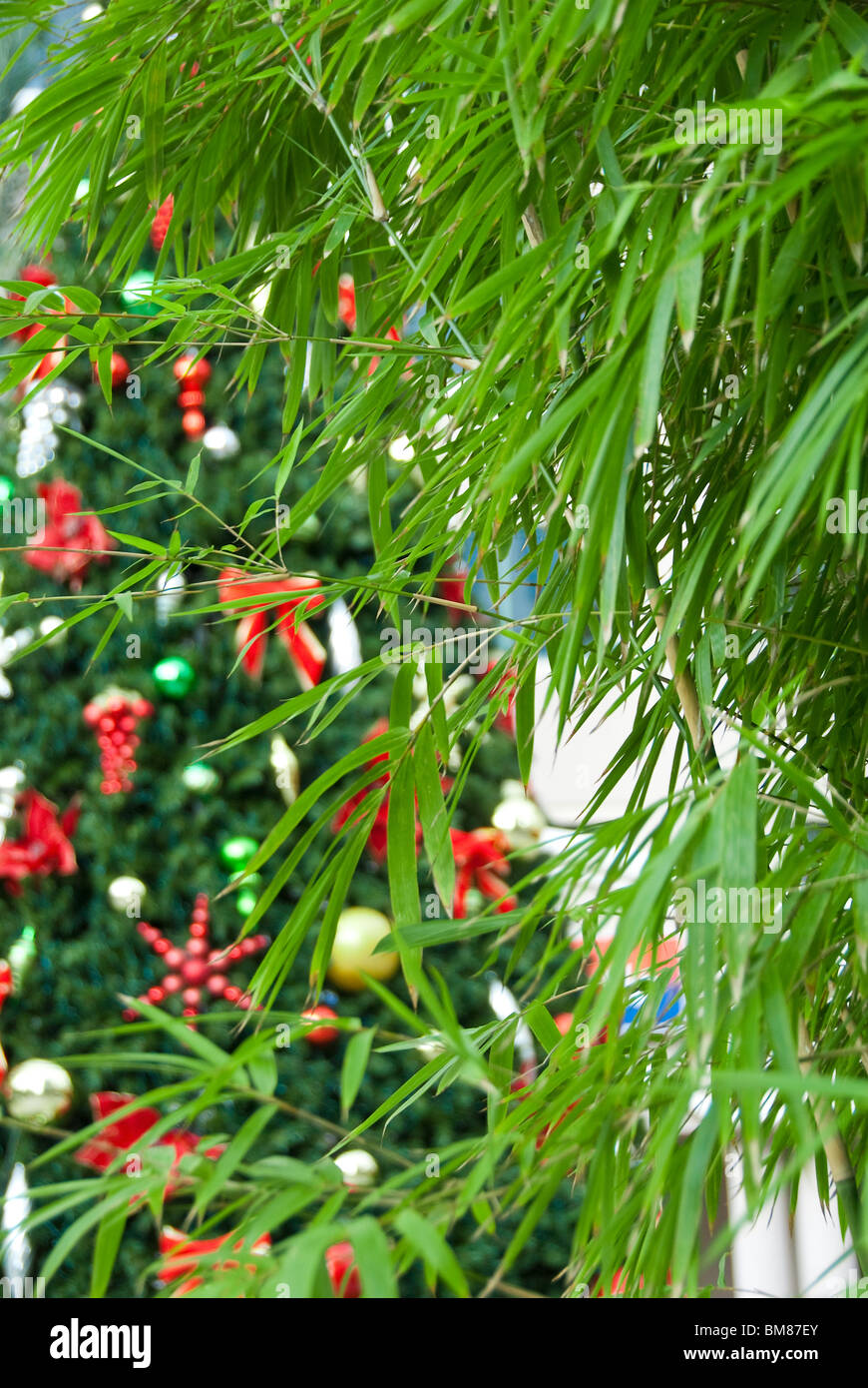 Exterior close-up of Christmas tree ornaments and bamboo landscaping on Las Olas Boulevard in Fort Lauderdale, Florida, - Stock Image