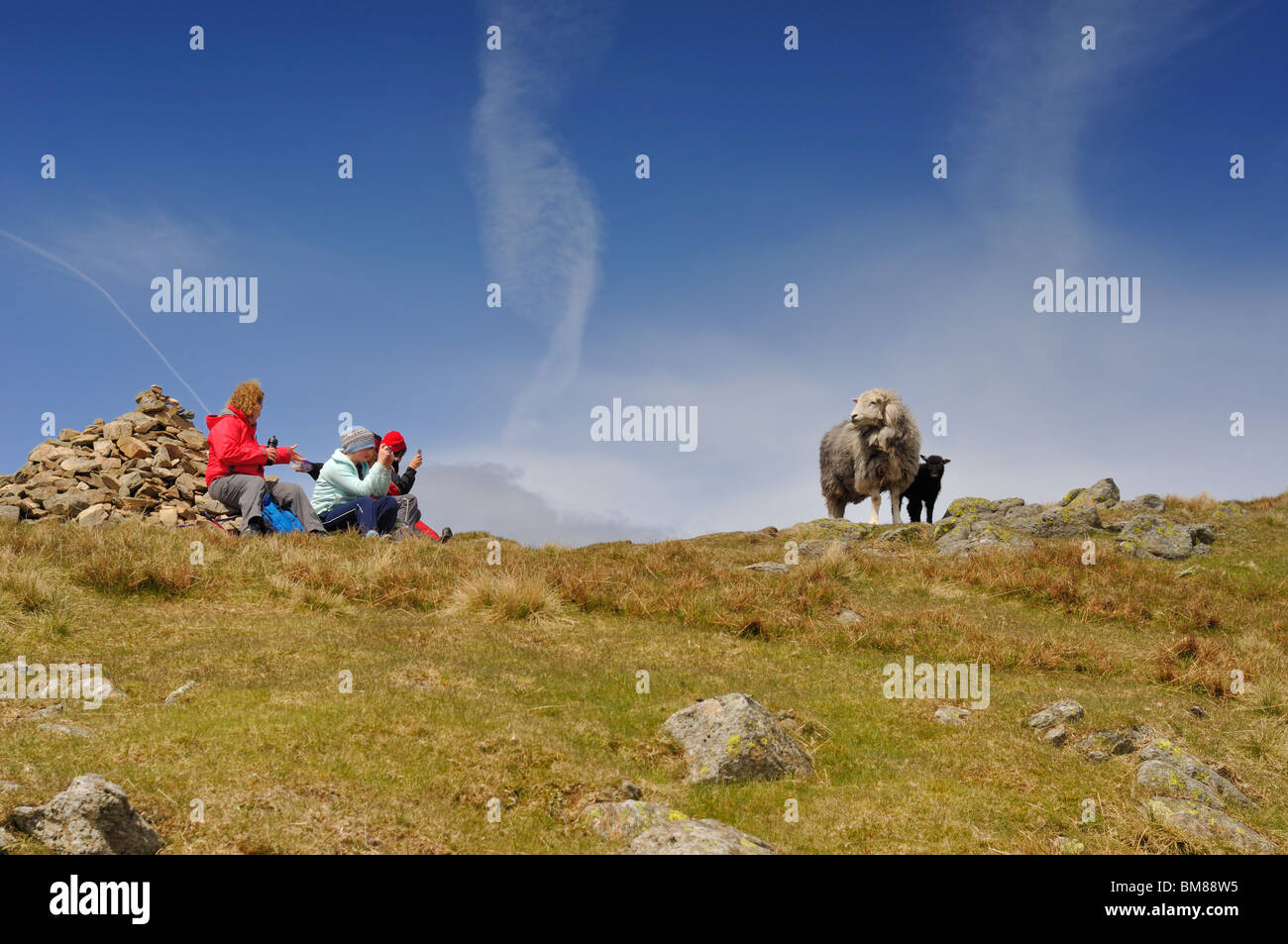 Family taking pictures of Ewe & her lamb on Great Rigg in the Lake District - Stock Image