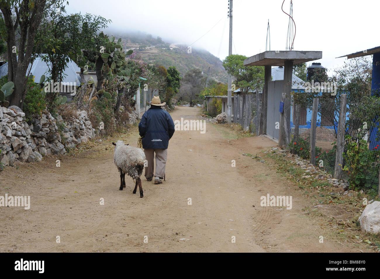 Man leading sheep along quiet country road in Santiago Apoala, Mexico. - Stock Image