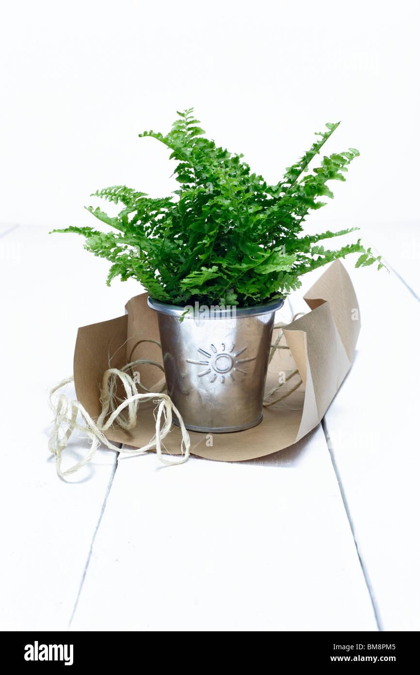 flowerpot with sun sign Stock Photo