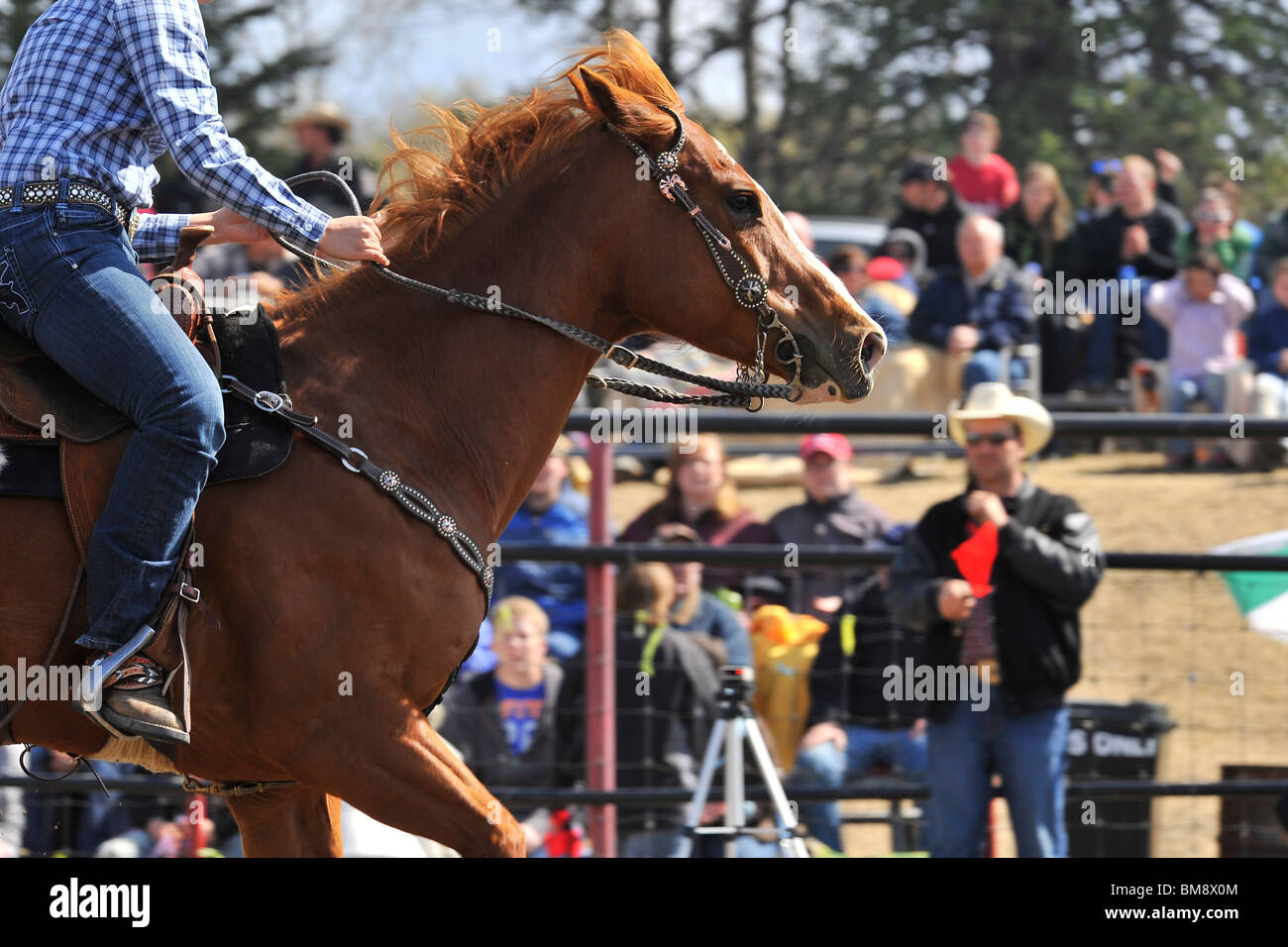 A close up image of a barrel racing horse crossing the timed finish line - Stock Image