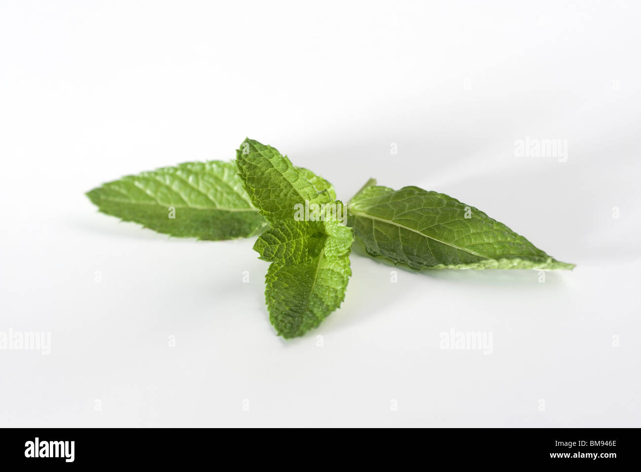 Mint sprig - Stock Image