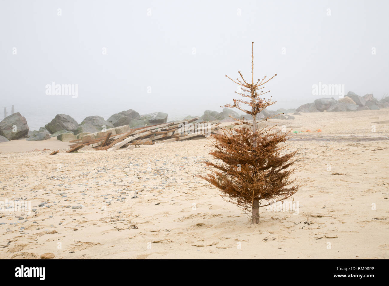 a lone dead christmas tree on a deserted beach happisburgh norfolk stock
