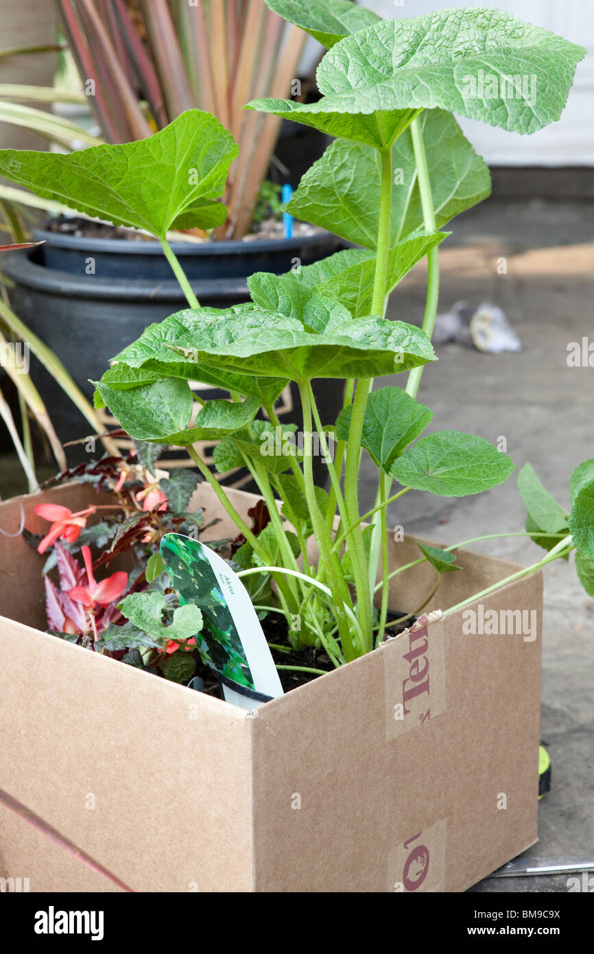Box of plants from a local gardening nursery ready to plant in the garden - Stock Image