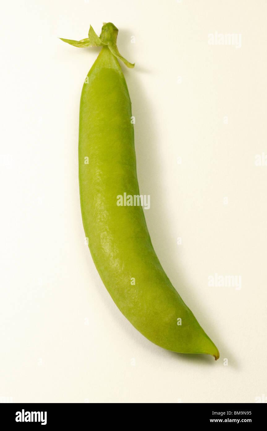 Garden Pea, Pea (Pisum sativum). Unripe pod, studio picture. - Stock Image
