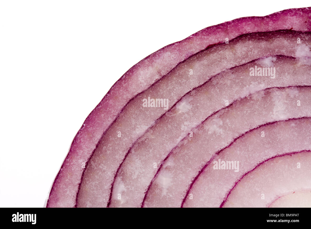 macro section of sliced red onion over white - Stock Image