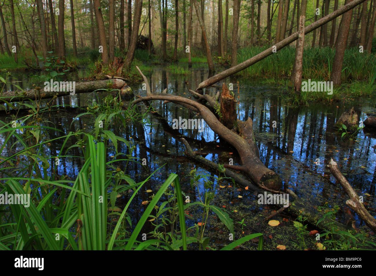 Beaver Land - Stock Image