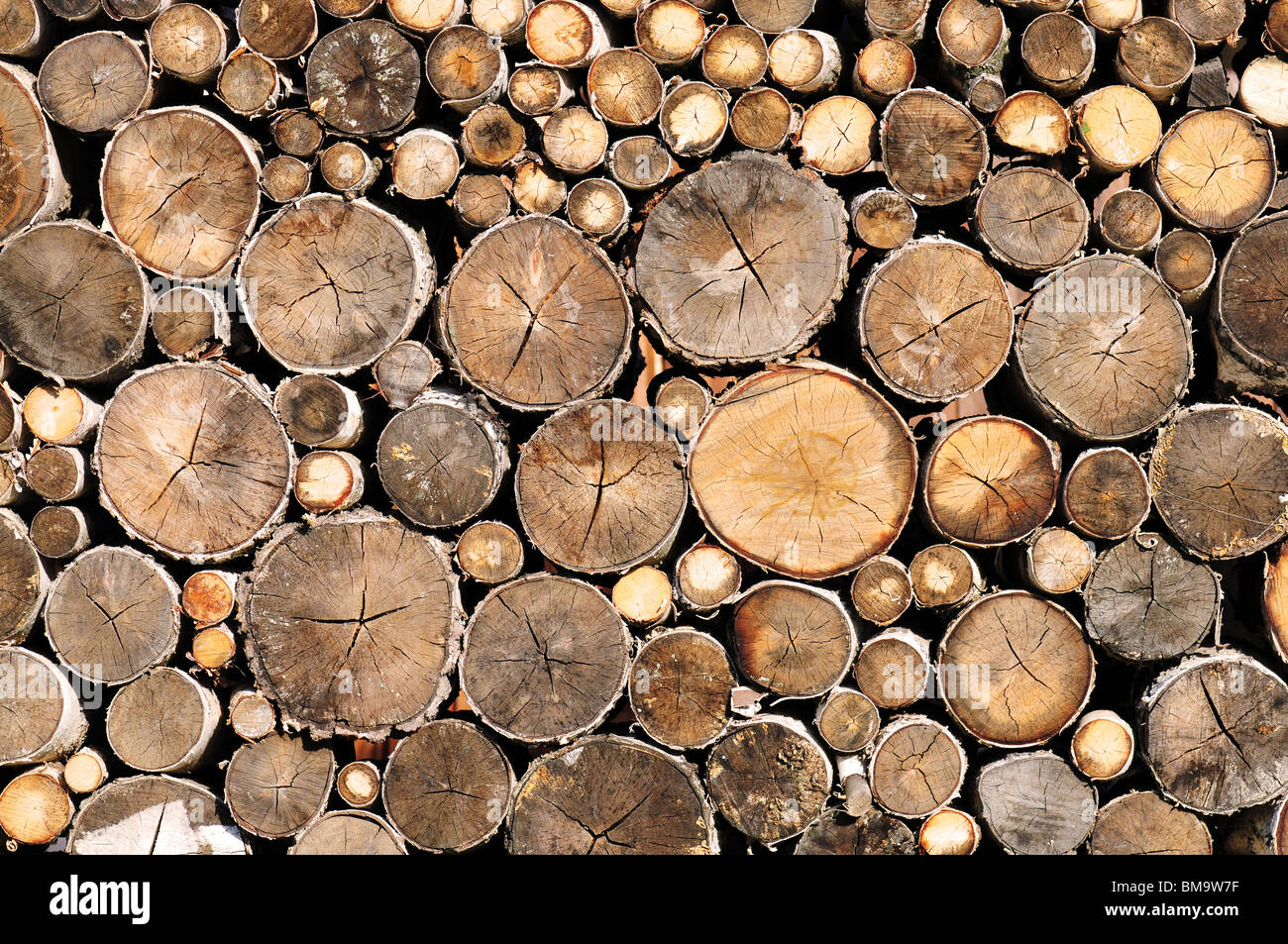 wall of log wood texture or background - Stock Image