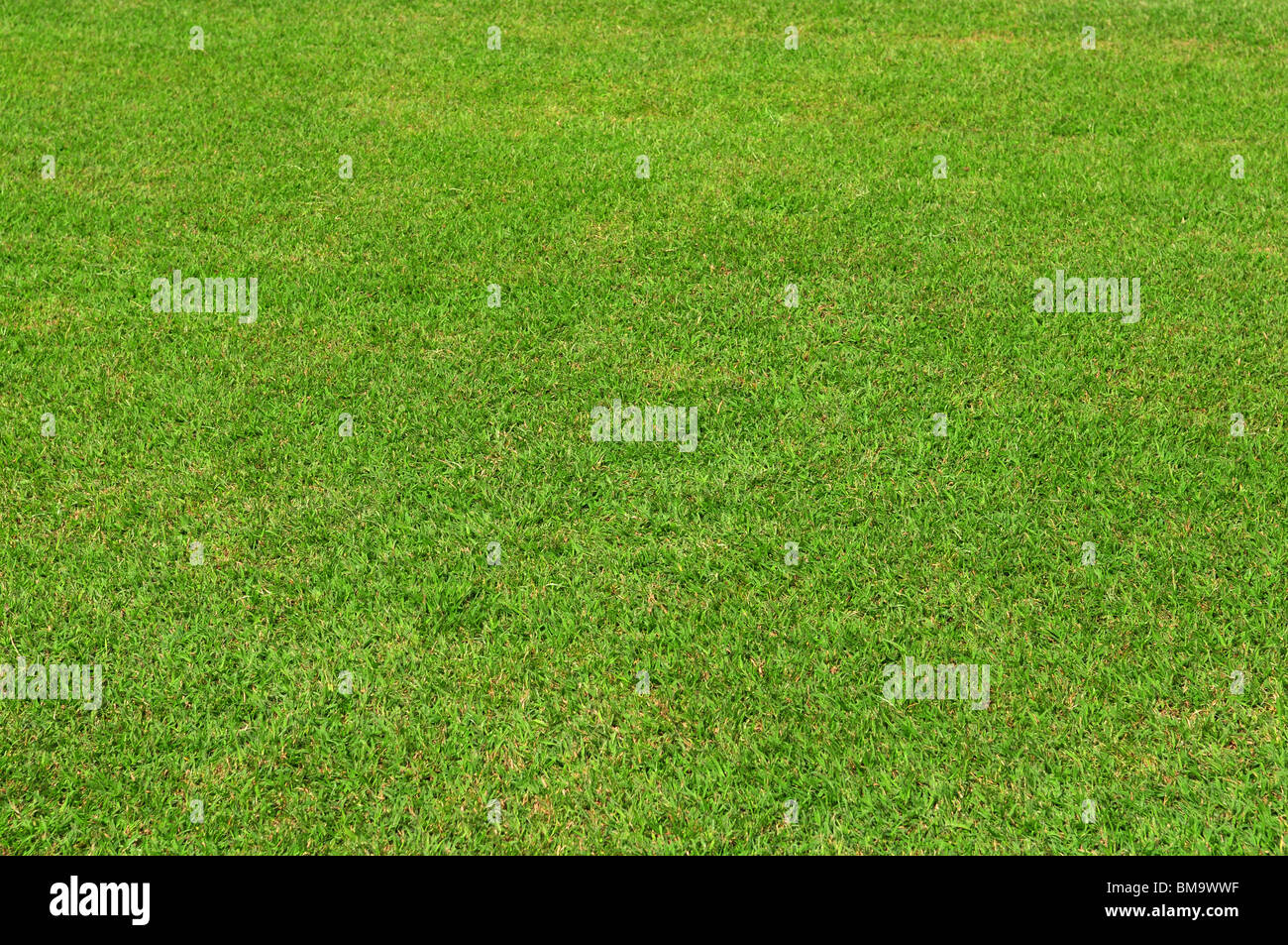 spring green grass texture or background for design - Stock Image
