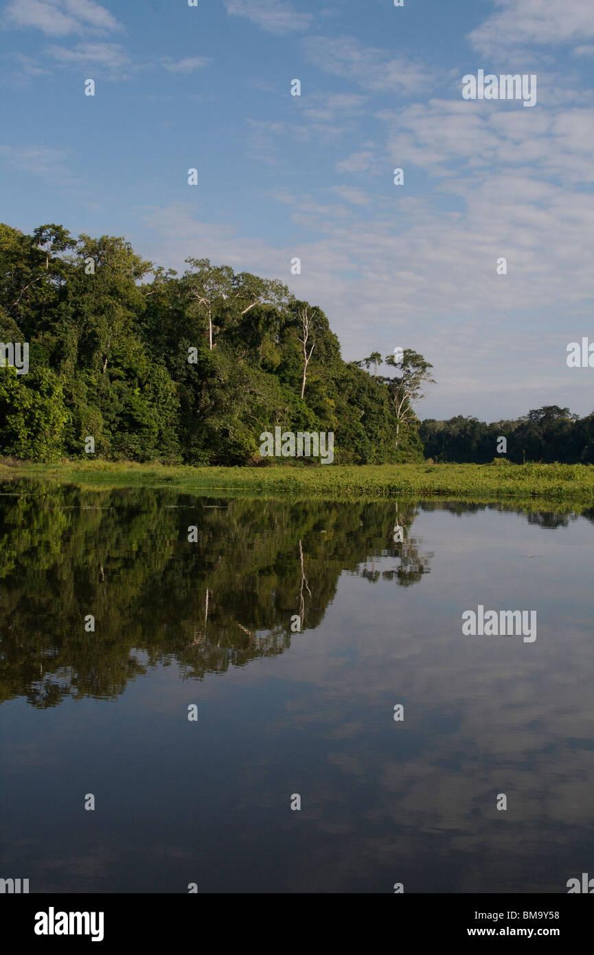 Ox-bow lake in Manu Nature Reserve, Peruvian Amazon - Stock Image