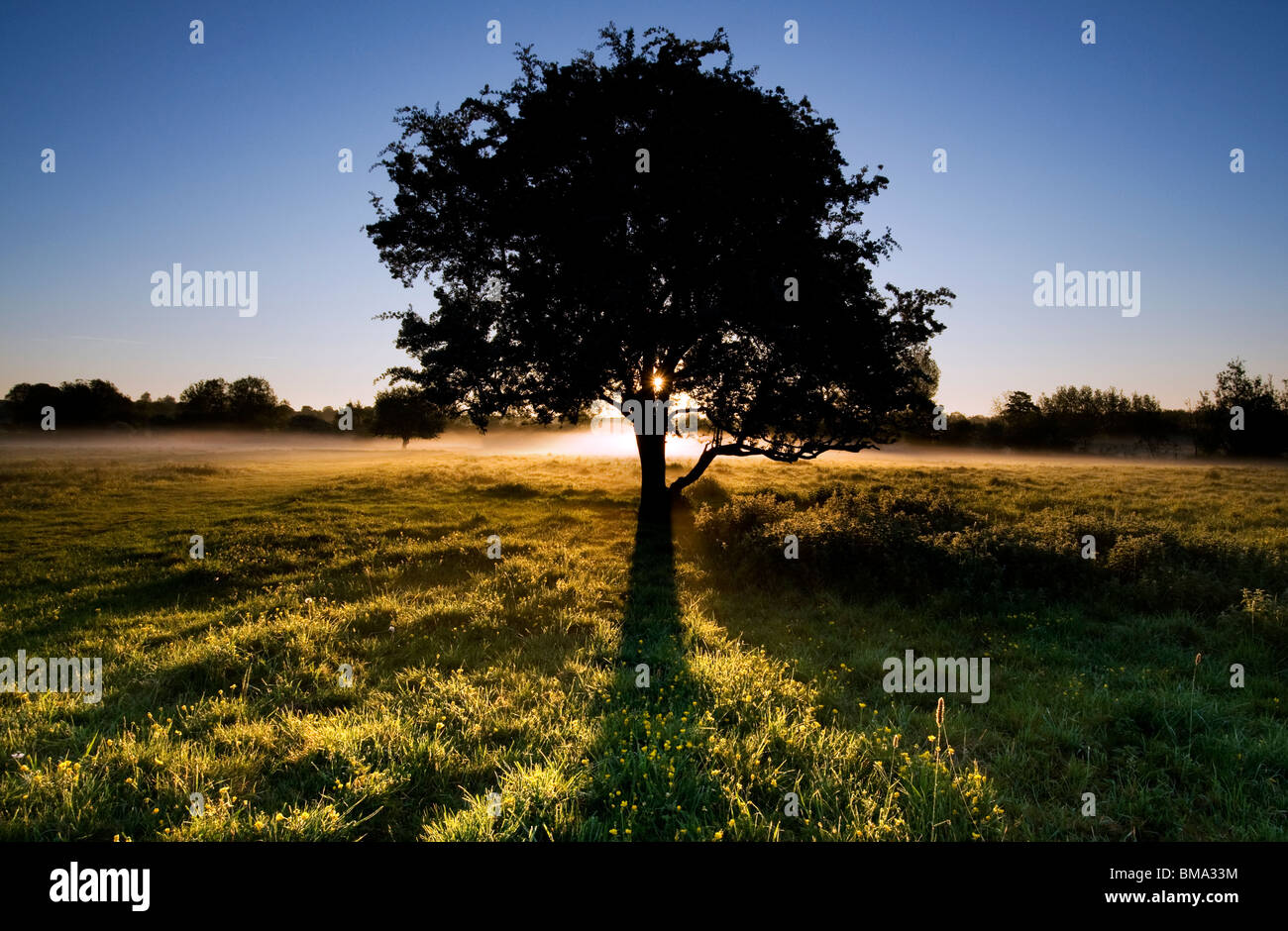Cotswolds - Tree at dawn near Minster Lovell Hall - Stock Image