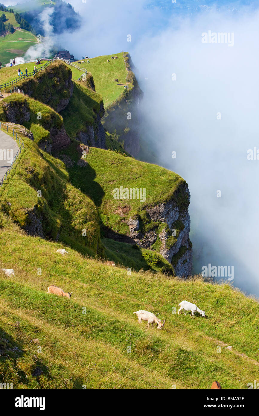 Alps landscape with goats on mountains. - Stock Image