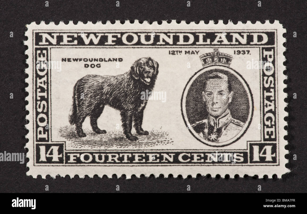 Postage stamp from Newfoundland depicting a Newfoundland dog - Stock Image