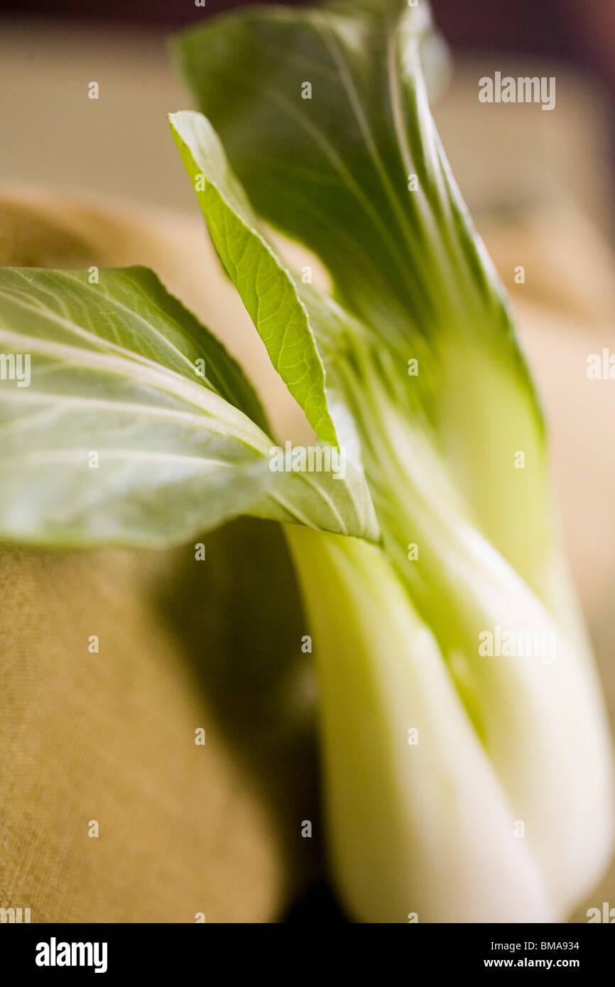 Bok choy - Stock Image