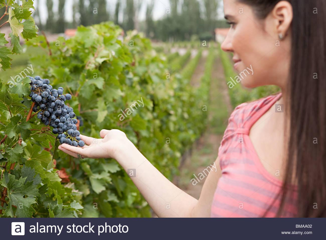 Woman looking at grapes - Stock Image
