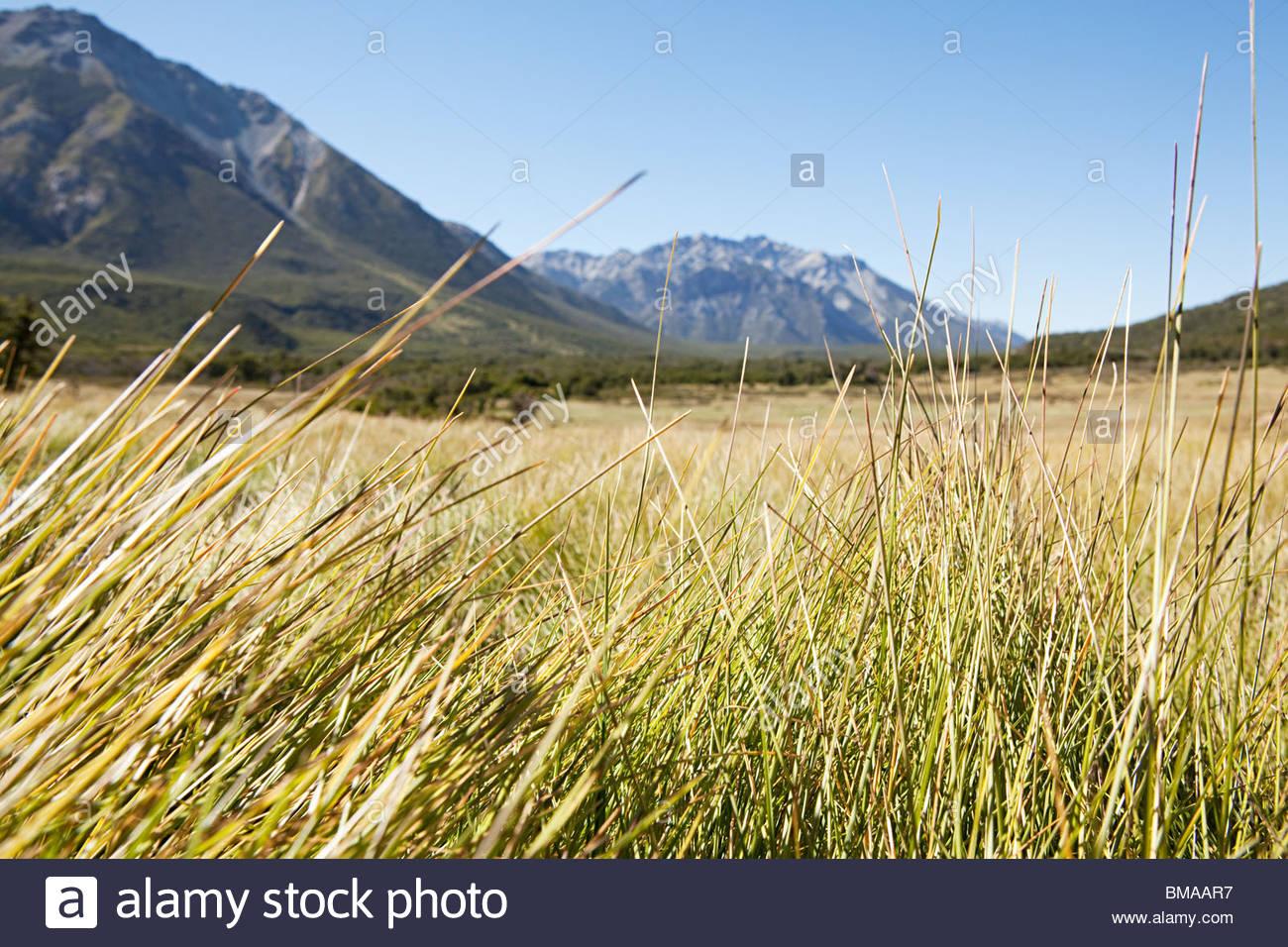 Peaceful rural landscape in argentina - Stock Image