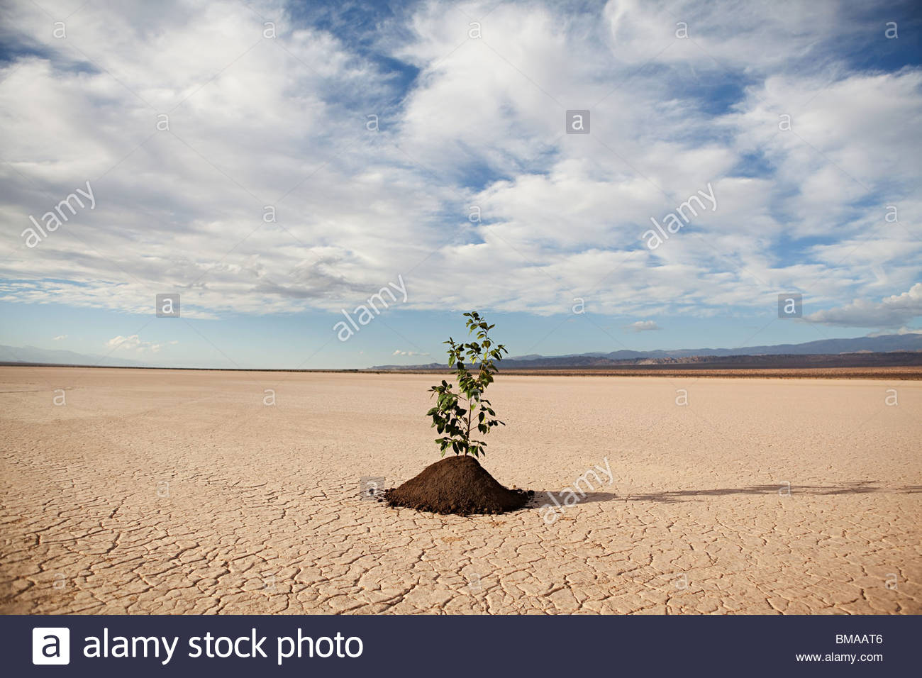Plant growing in desert landscape - Stock Image