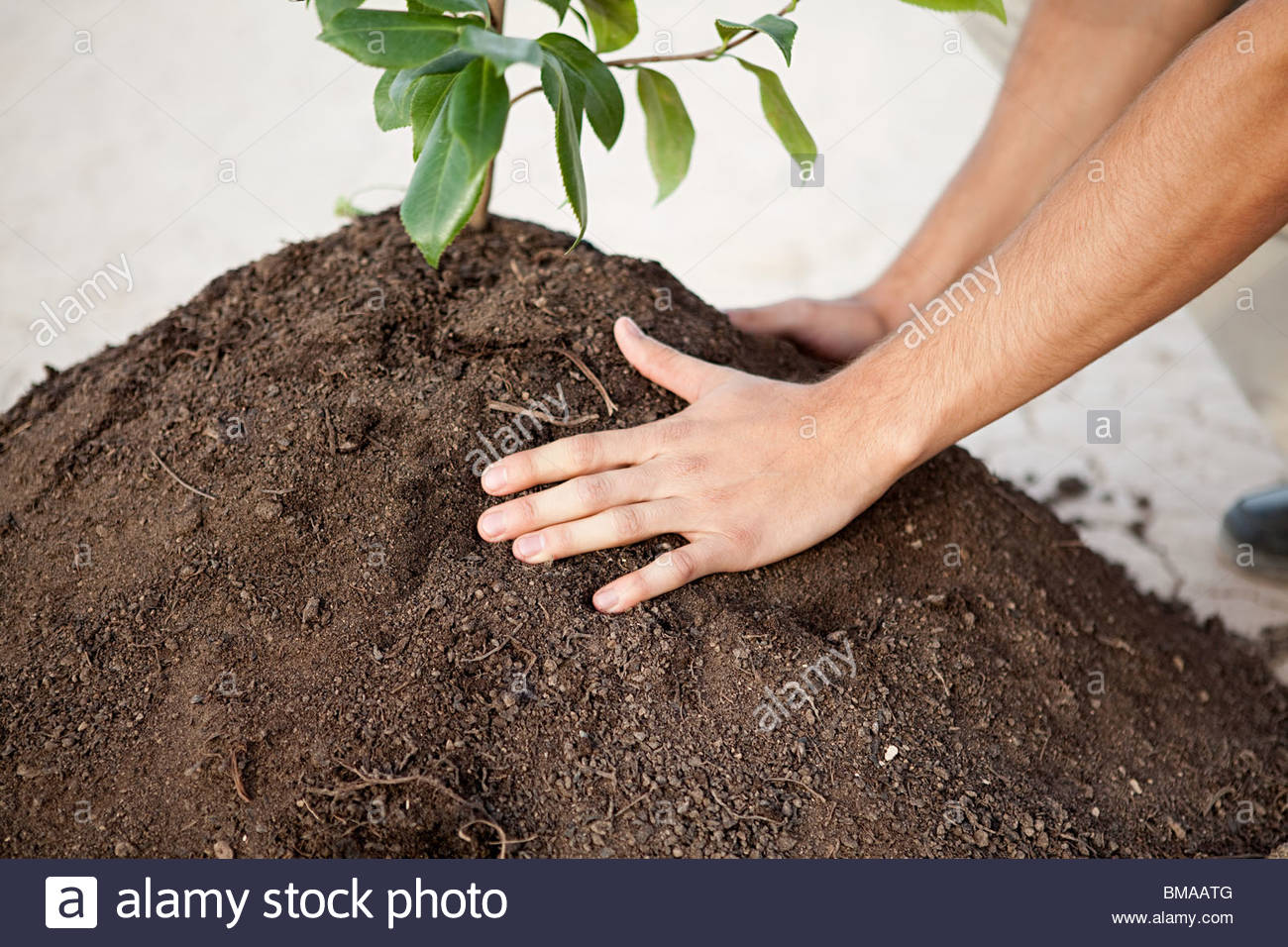 Person with plant in soil - Stock Image