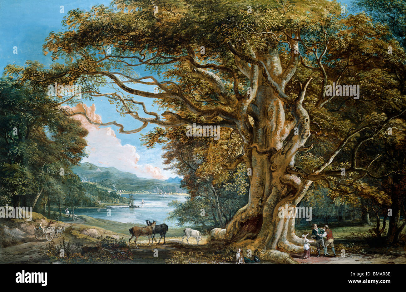 An Ancient Beech Tree, by Paul Sandby. England, 1794 - Stock Image