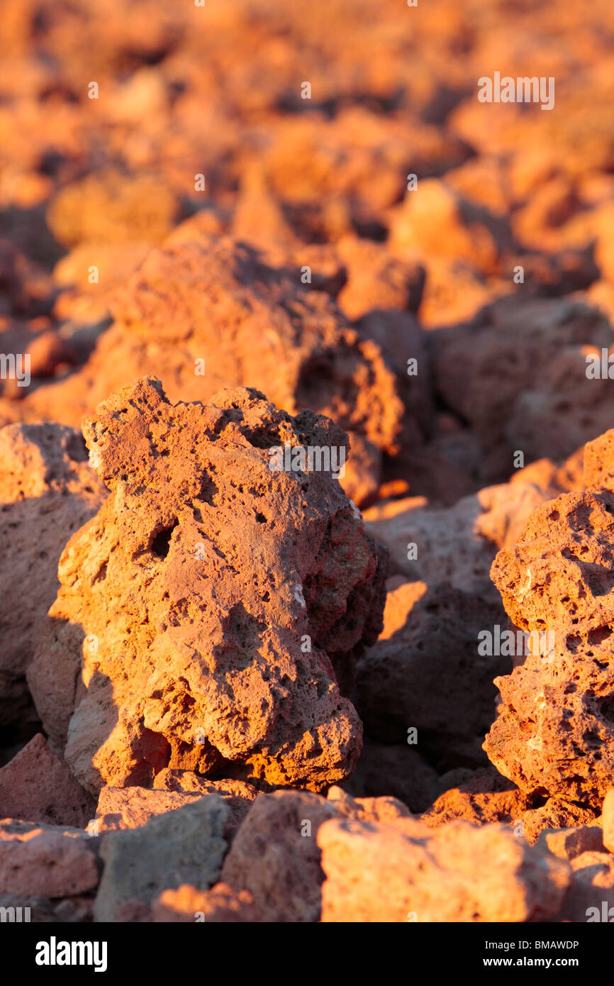 Fields of pumice stone glowing red with the warm late evening sun at the base of Teide Tenerife Canary Islands Spain - Stock Image