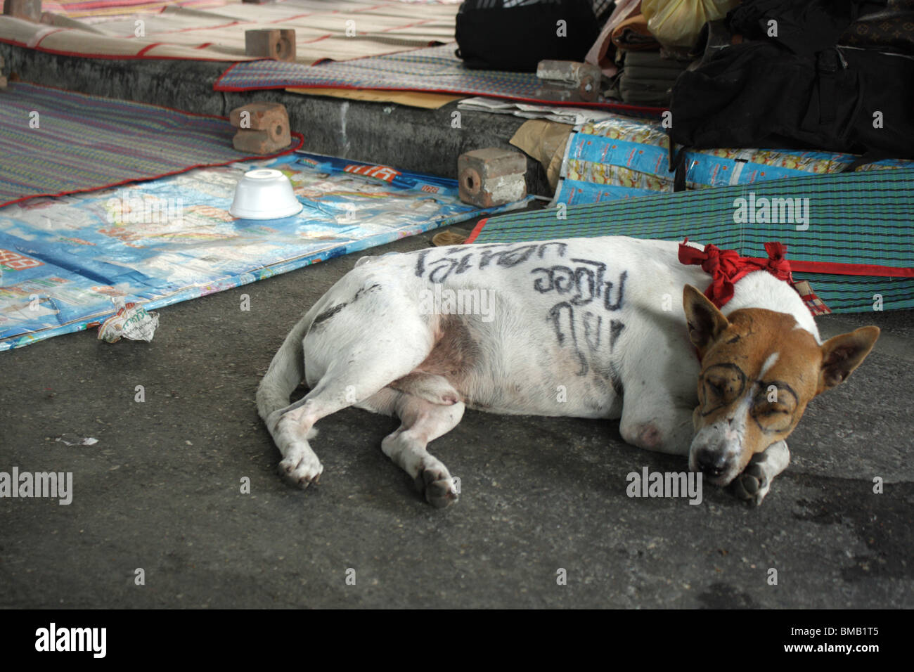 A dog during an anti-government protest at central world junction in Bangkok - Stock Image