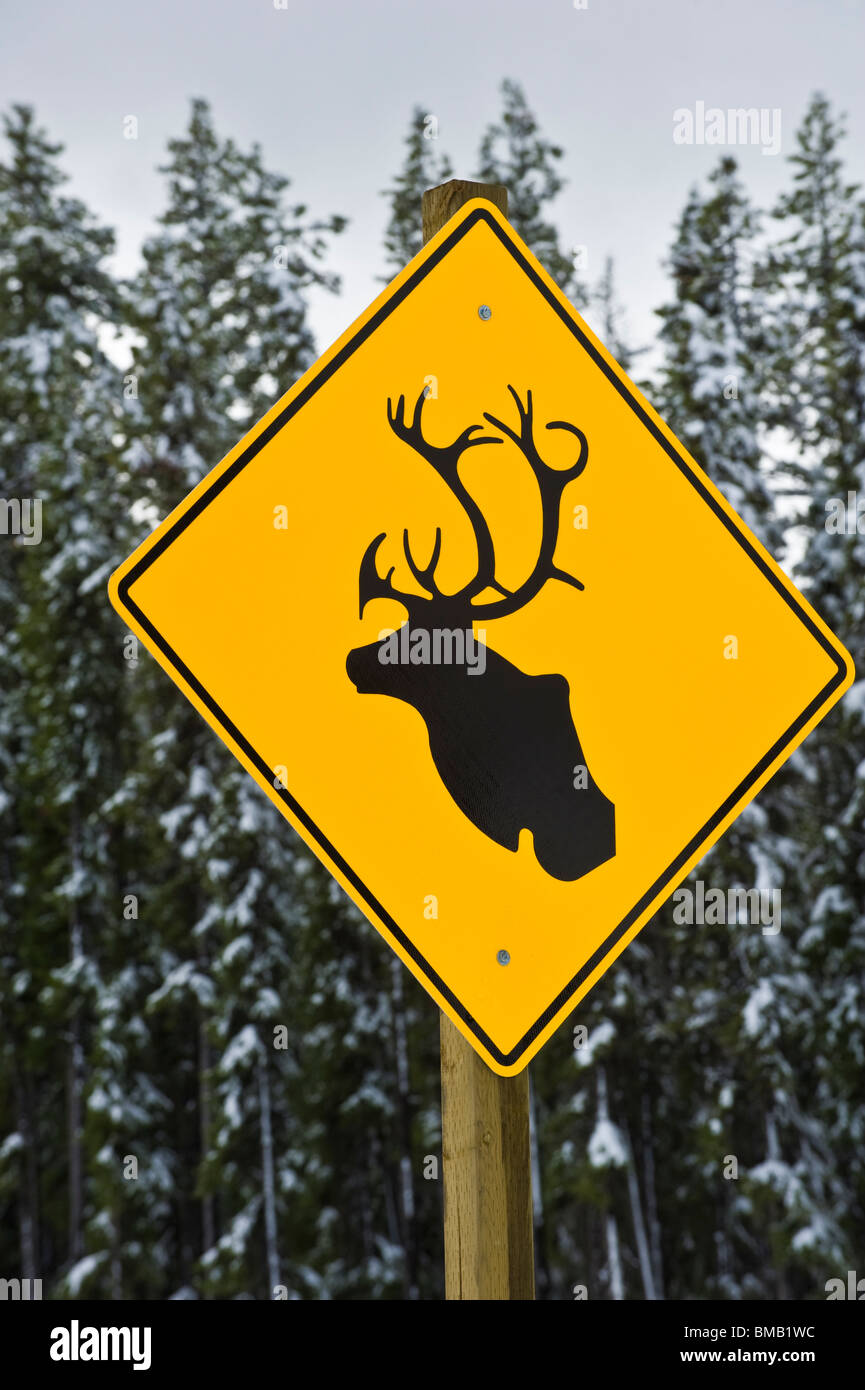 A highway sign warning of wild caribou - Stock Image