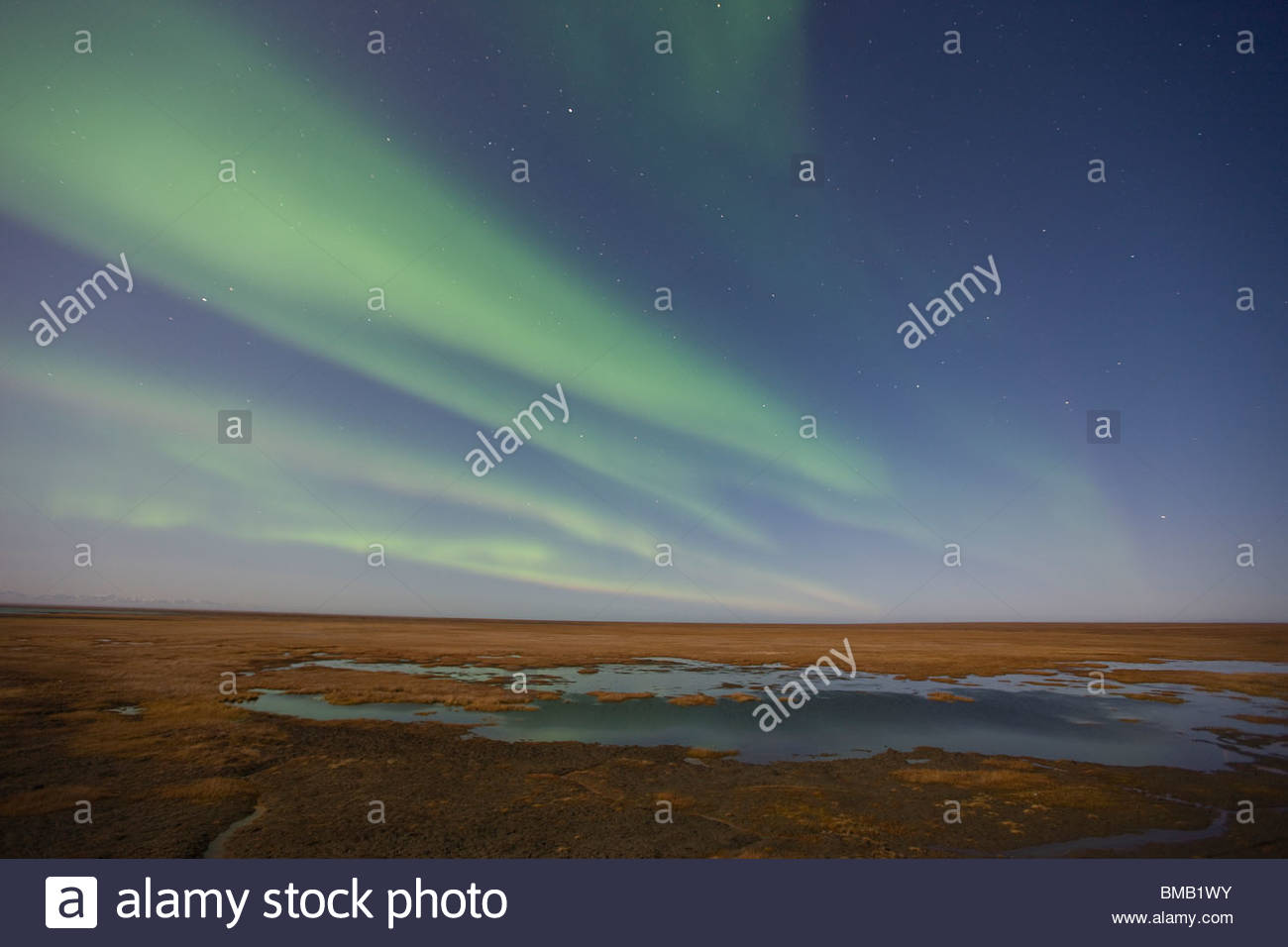 Curtains of colored northern lights (aurora borealis) dance in the night sky over the arctic tundra on the coastal - Stock Image