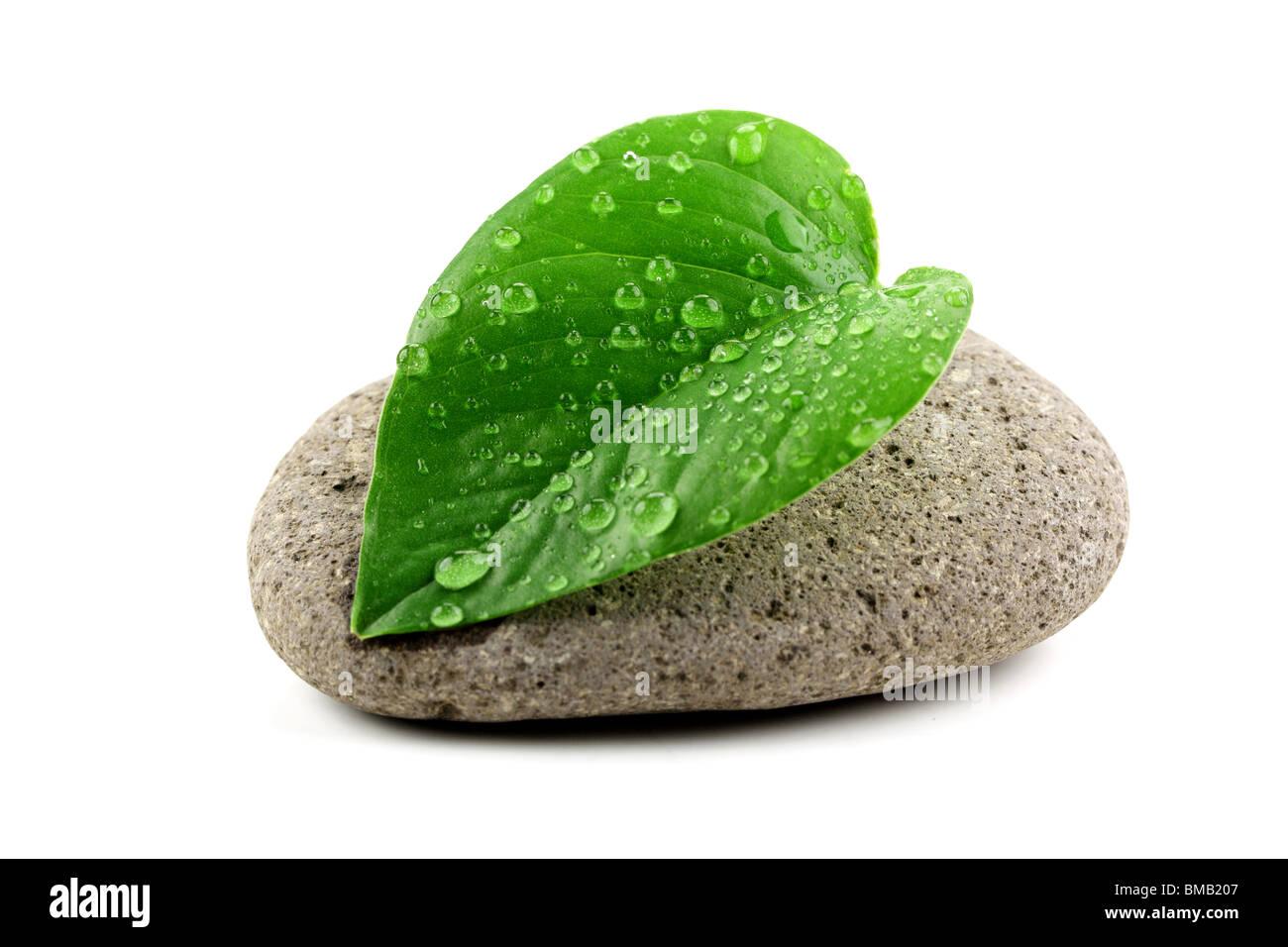 zen stone with leaf,isolated on white. - Stock Image