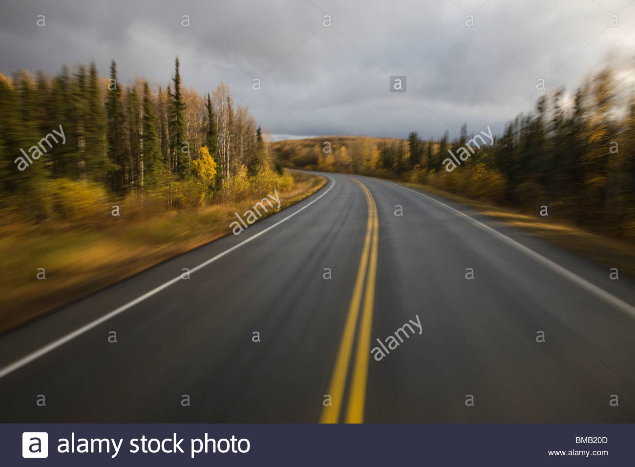 Trees of the boreal forest are turned to their fall colors along Elliot Highway in Interior Alaska - Stock Image