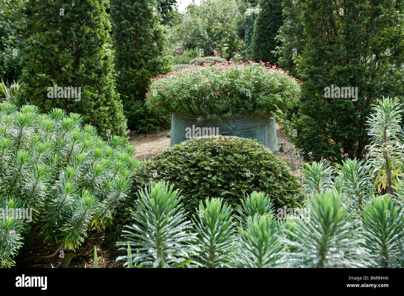 Euphorbia, Yew tree topiary and copper pot with pink flowers, Hanham Court Gardens, Cotswolds, UK - Stock Image