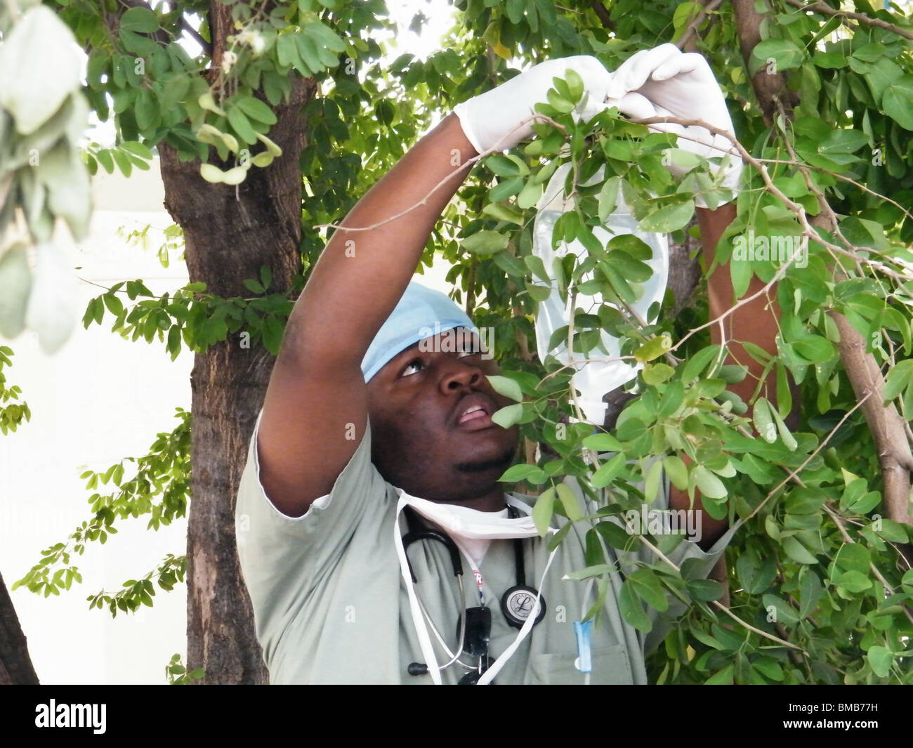A Dominican doctor attatches a drip to a tree in Port au Prince after the Haiti earthquake - Stock Image