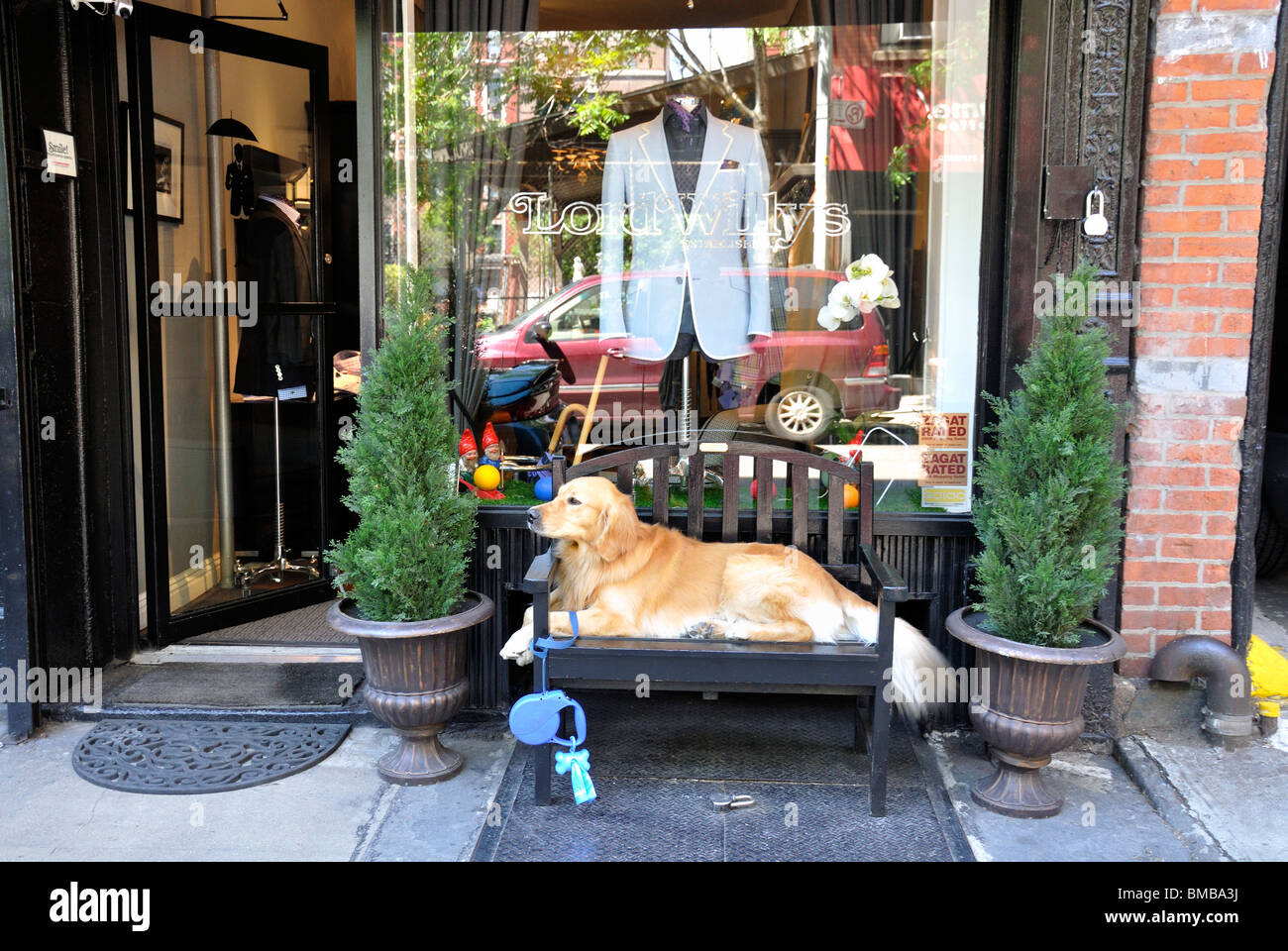 Dog, a golden retriever, relaxing on a bench in front of men's fashion shop on Mott Street in New York City - Stock Image