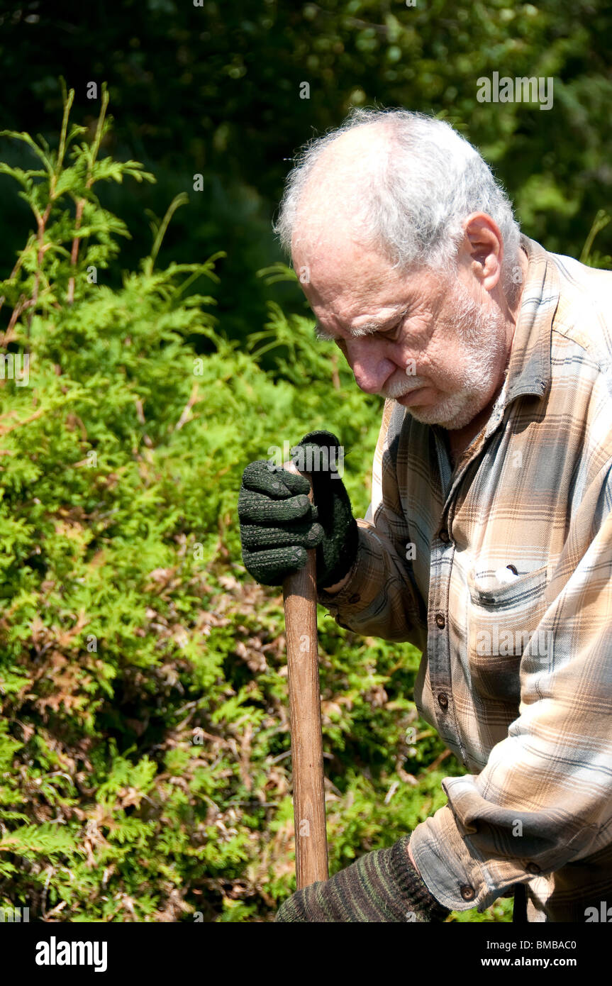 golden aged gardener at work with gloves and shovel - Stock Image