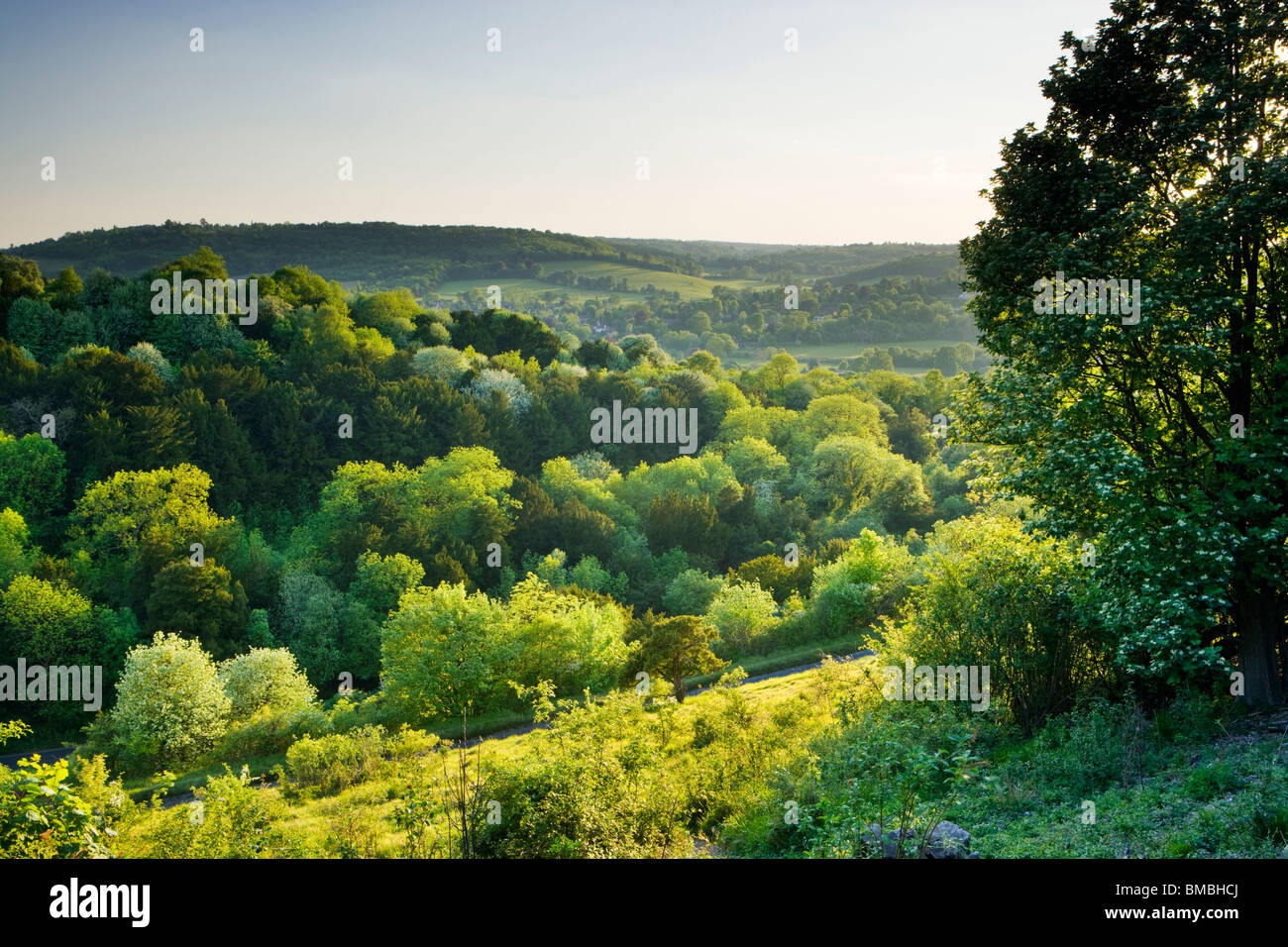 Box Hill at the Zig-zag, Surrey, UK. Spring - Stock Image