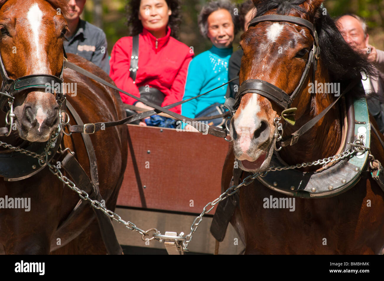 Chinese tourists in Germany enjoying a traditional horse carriage ride near Neuschwanstein Castle. Stock Photo
