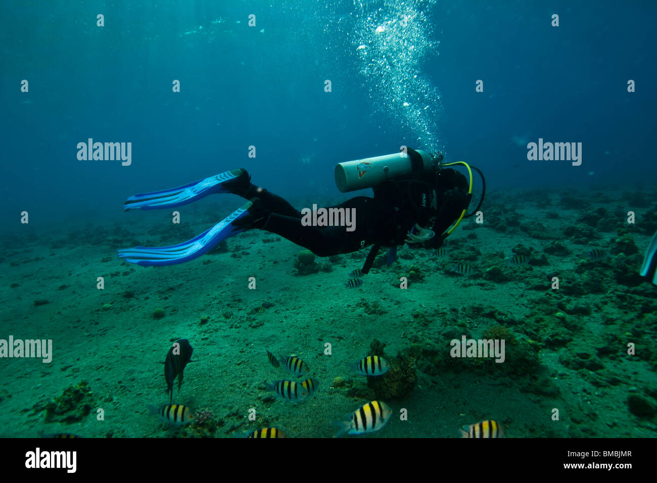Male diver, shalow waters and reef fishes - Stock Image